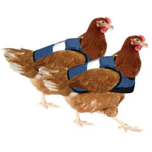 Blue High-Vis Chicken Jacket Twin Pack