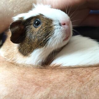 The most talkative of pigs- meet Monty.