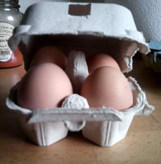 Omlet Egg Box