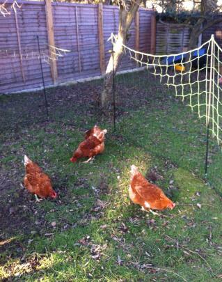 21 metre chicken netting
