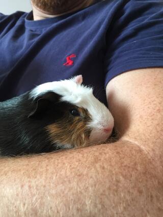 Herbie- the chubster!