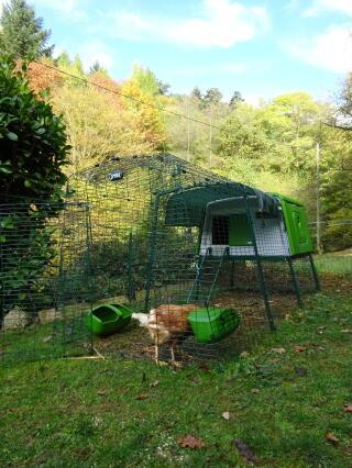 L'automne s'installe autour de nos poulettes et de leur grand Eglu Cube ;-)