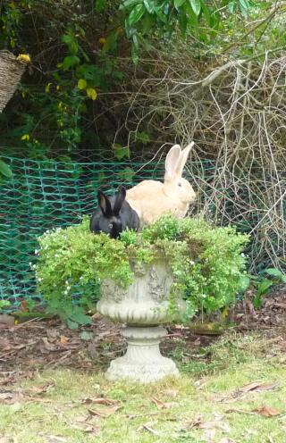 naughty rabbits Bon Bon and Muffin