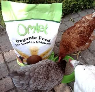 Omlet Feed