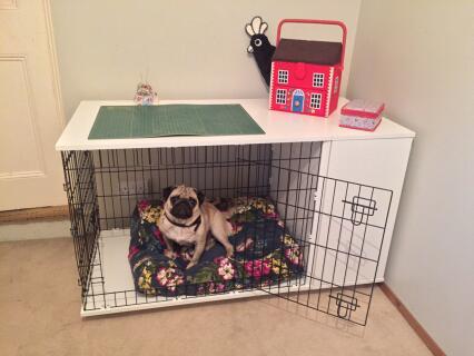 Boris enjoying his new mansion!