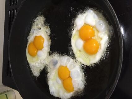 Eggs from our 24 week old Barred Rock :)