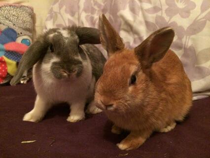 Bella and Bonnie