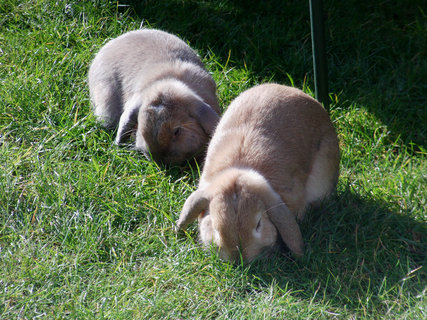 They love their grass!