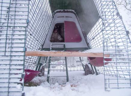Notre perchoir sous la neige