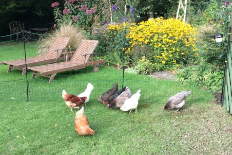 Happy chickens and safe flowers!