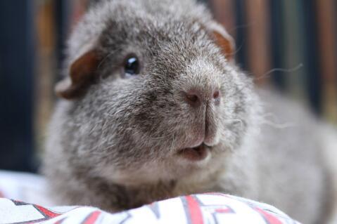 Wario, the greedy little Rex piggy.