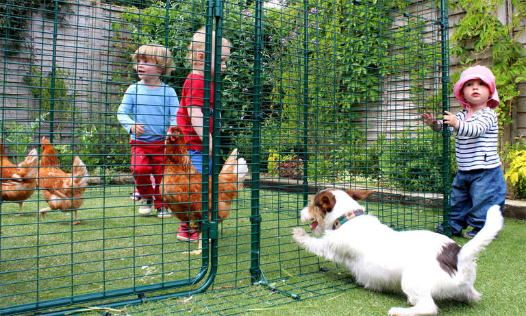 The Walk in Chicken Run is pet-proof so your chickens will be safe