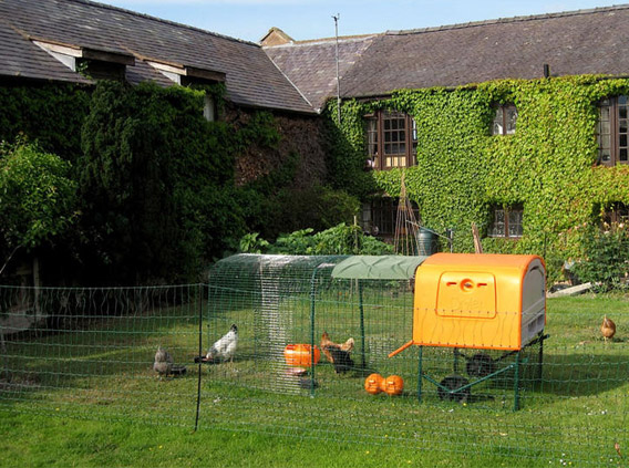 The Eglu Cube chicken house in a backyard.
