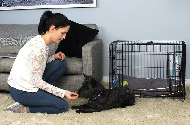 Housetraining a puppy with a Fido Classic