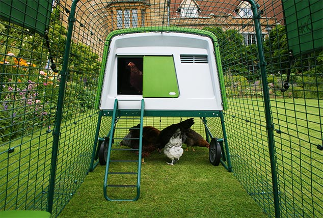 The New Eglu Cube Chicken Coop has a strong fox resistant run